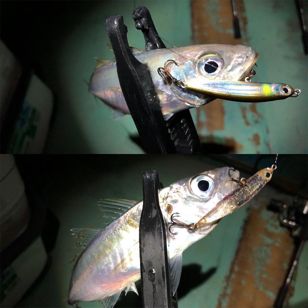 f:id:fishing-aquarium:20210414200803j:image