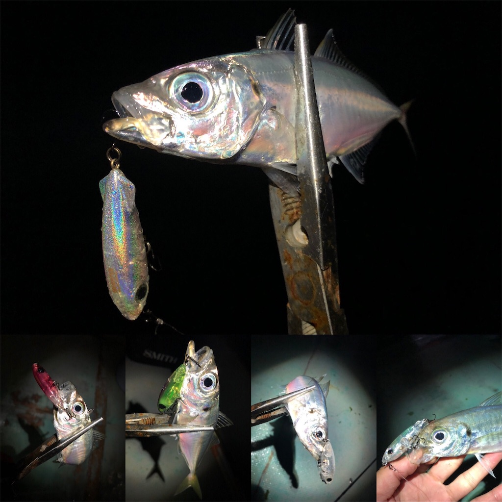 f:id:fishing-aquarium:20210414200931j:image