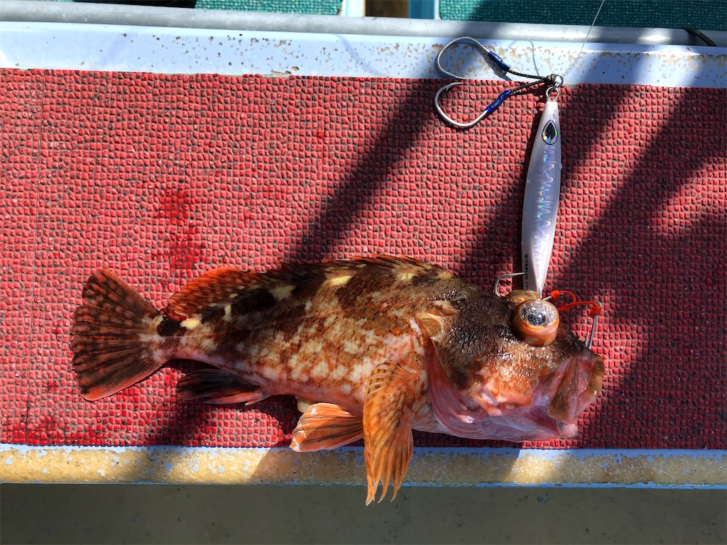 f:id:fishing-aquarium:20210516113050j:image