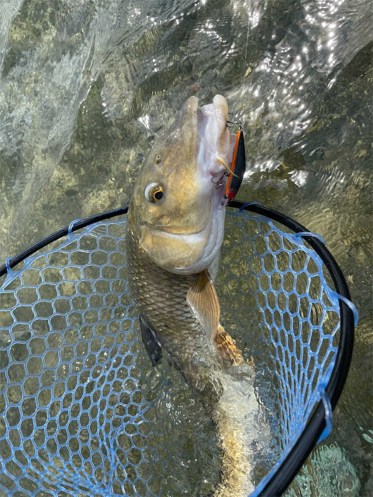 f:id:fishing-aquarium:20210804113815j:image