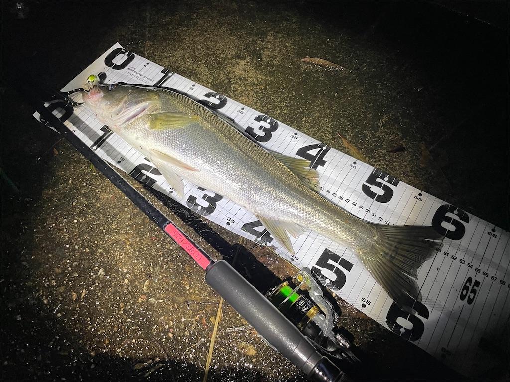 f:id:fishing-aquarium:20210824205859j:image