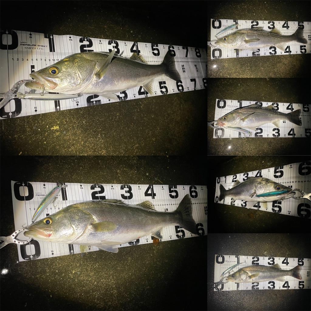 f:id:fishing-aquarium:20211002105126j:image