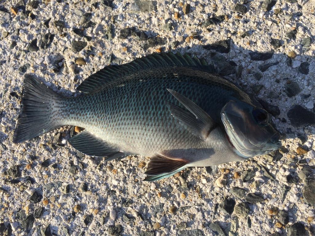 f:id:fishing-camping:20181114160055j:image