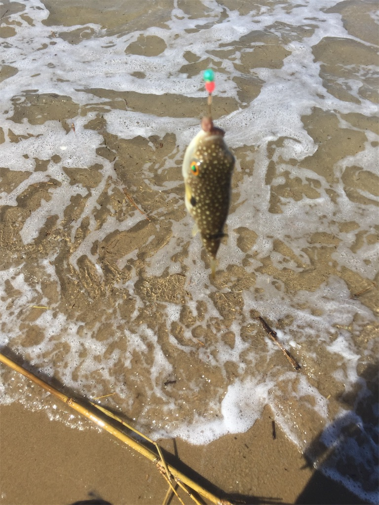 f:id:fishing-camping:20190901133959j:image
