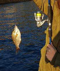 f:id:fishing-go:20170202233210p:plain
