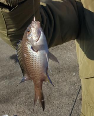 f:id:fishing-go:20170202233626p:plain