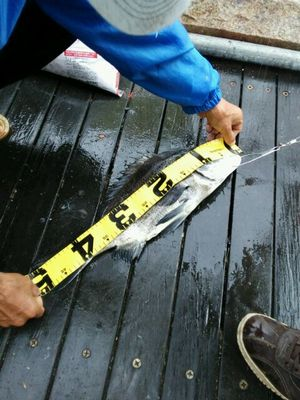f:id:fishing49:20170702164517j:plain