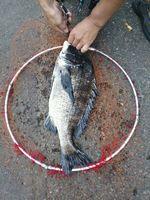 f:id:fishing49:20170730203434j:plain