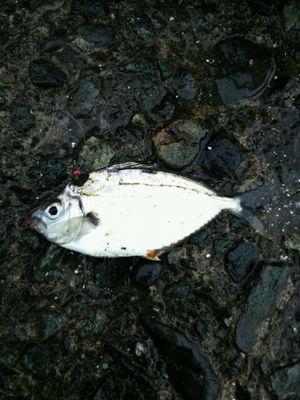 f:id:fishing49:20171015030053j:plain