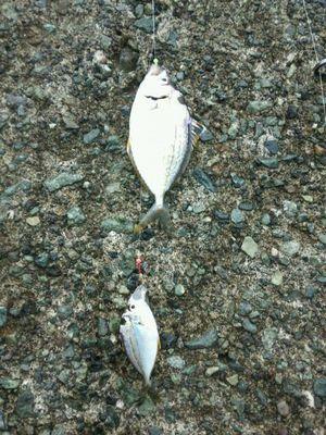 f:id:fishing49:20171015030245j:plain