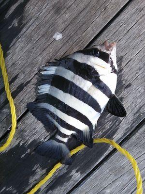 f:id:fishing49:20180922214010j:plain