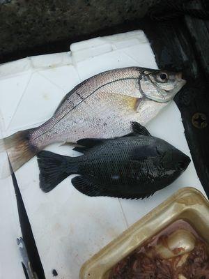 f:id:fishing49:20180922214032j:plain