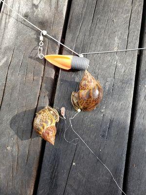 f:id:fishing49:20181008220530j:plain