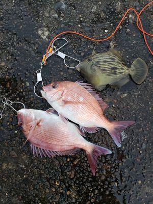 f:id:fishing49:20181111162705j:plain