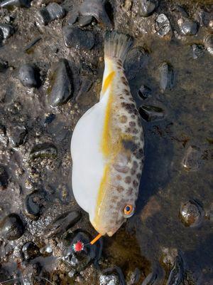 f:id:fishing49:20181119210558j:plain