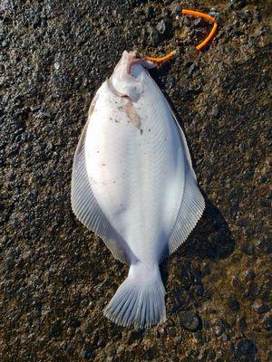 f:id:fishing49:20190105225945j:plain