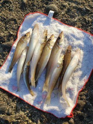 f:id:fishing49:20190414092316j:plain