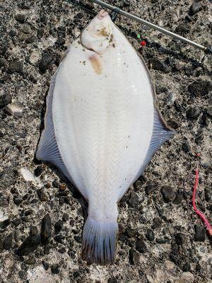 f:id:fishing49:20190421182109j:plain