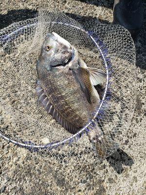 f:id:fishing49:20190421182410j:plain