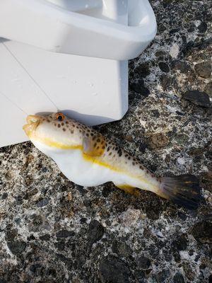 f:id:fishing49:20190603152205j:plain