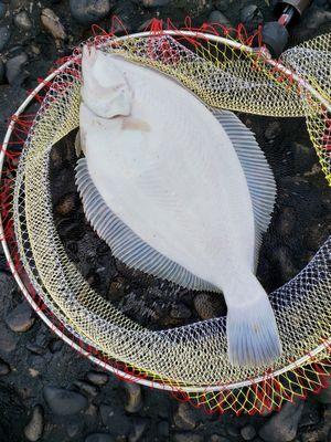 f:id:fishing49:20200113152805j:plain