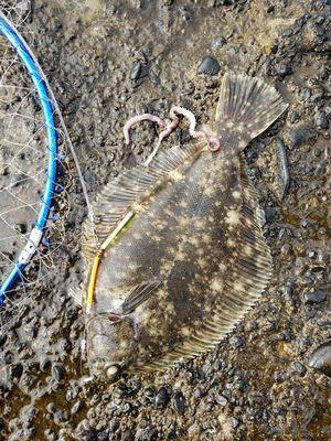 f:id:fishing49:20200126101402j:plain