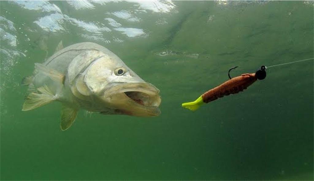 f:id:fishing_life21:20200706214400j:image