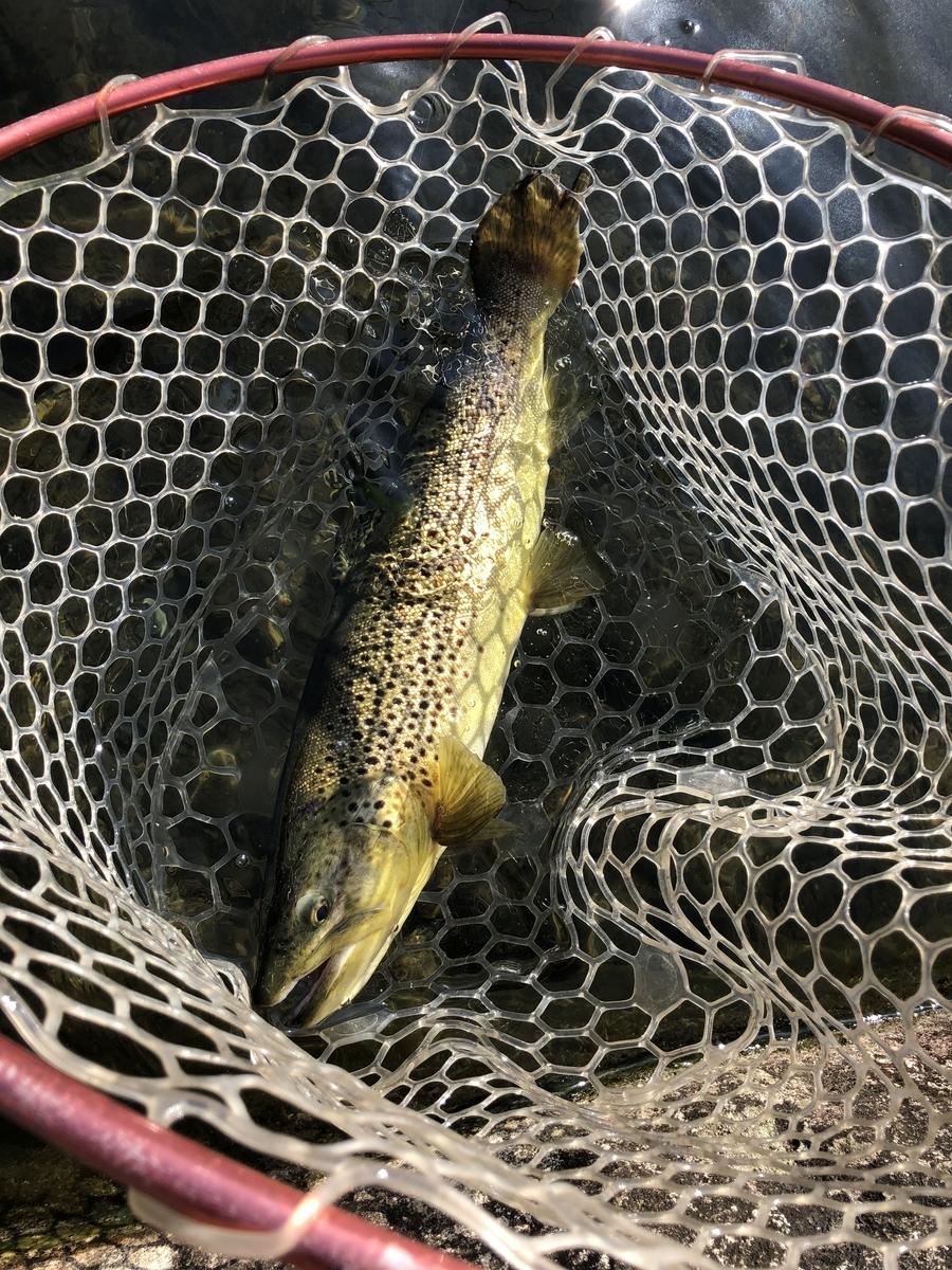 f:id:fishing_tanuki:20200822203914j:plain