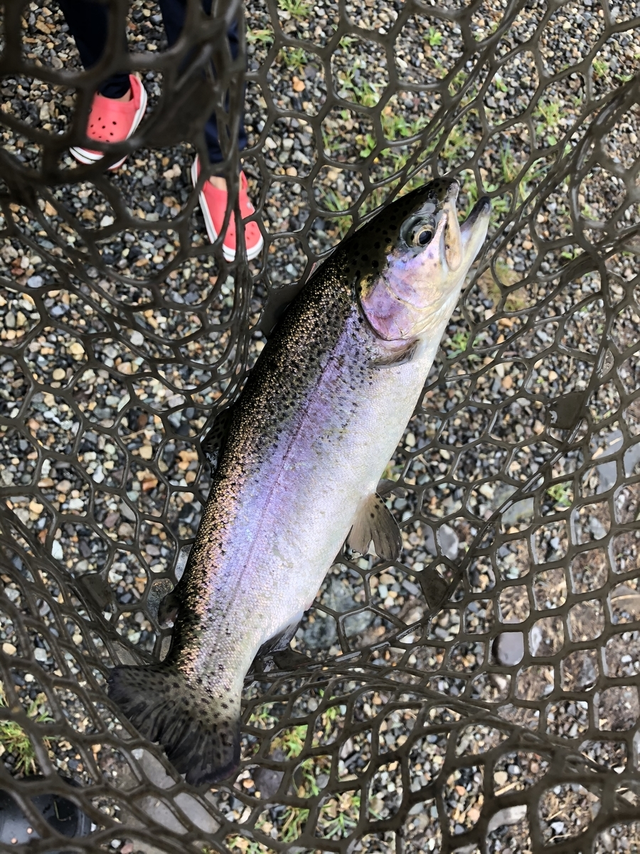 f:id:fishing_tanuki:20200908214200j:plain