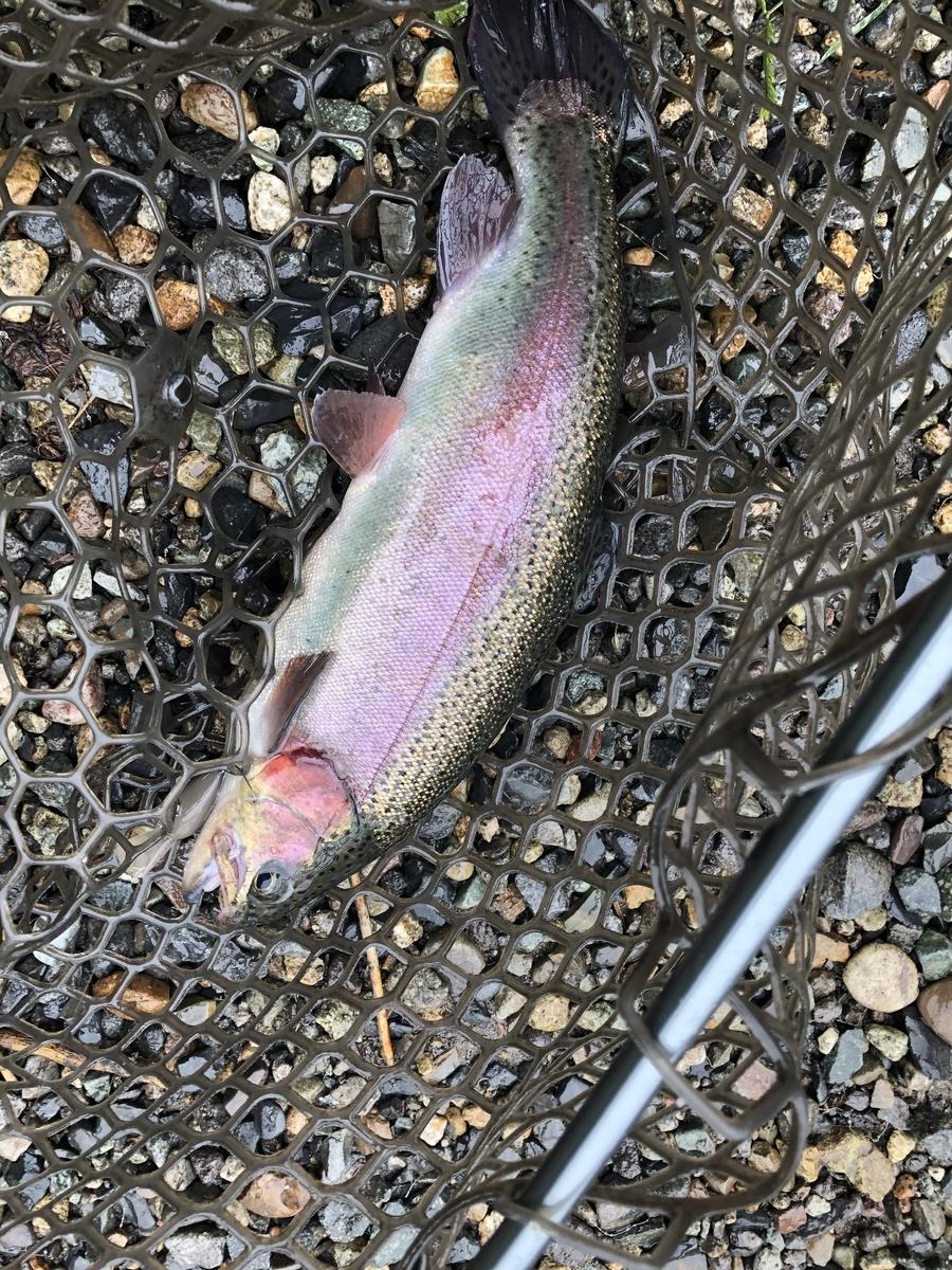 f:id:fishing_tanuki:20200908214248j:plain