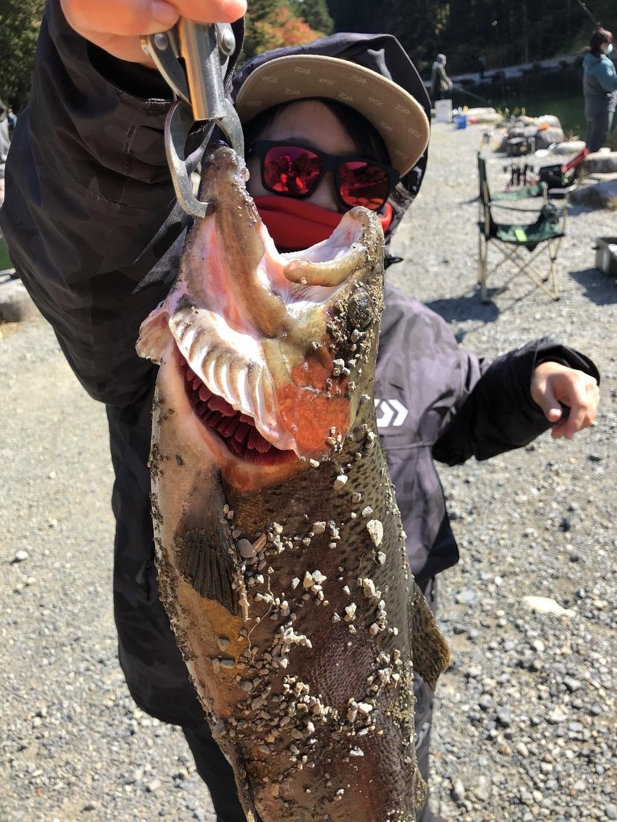 f:id:fishing_tanuki:20201229000136j:plain
