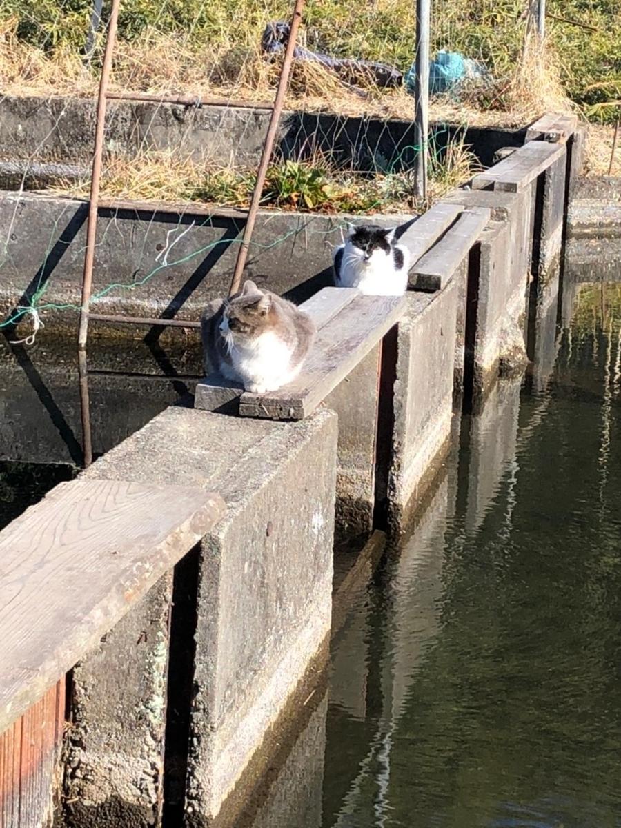 f:id:fishing_tanuki:20210222212642j:plain
