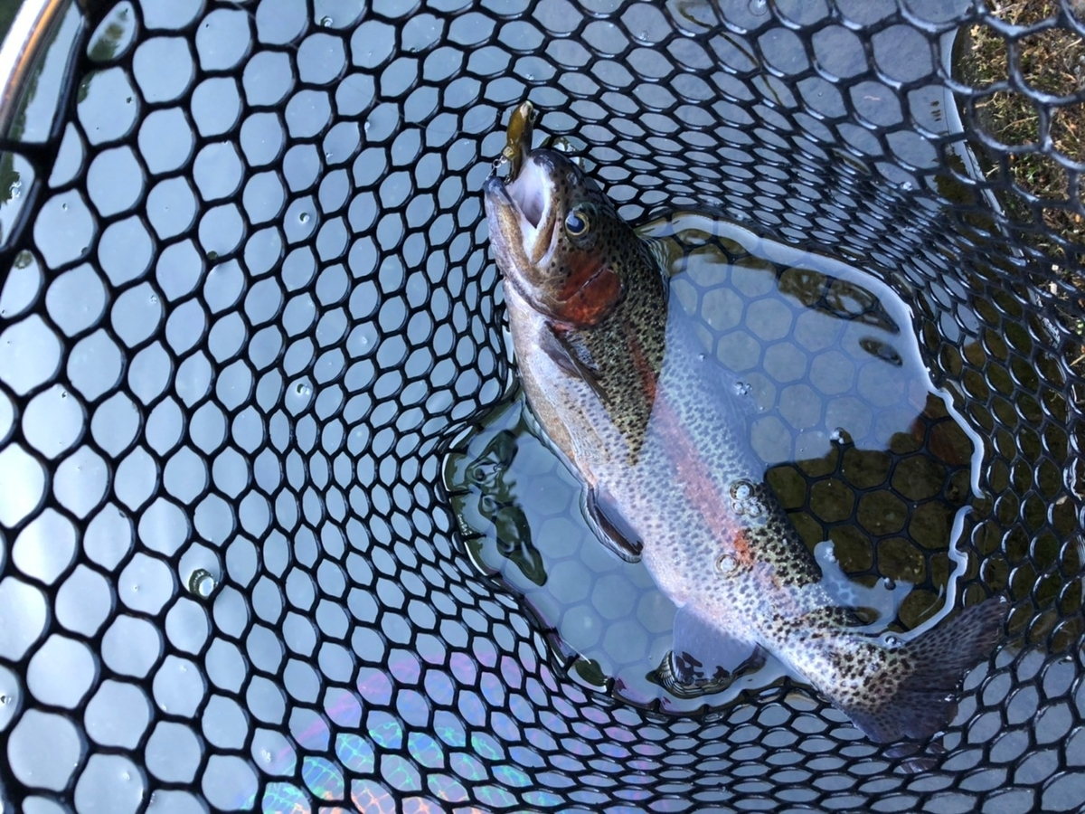 f:id:fishing_tanuki:20210301230539j:plain