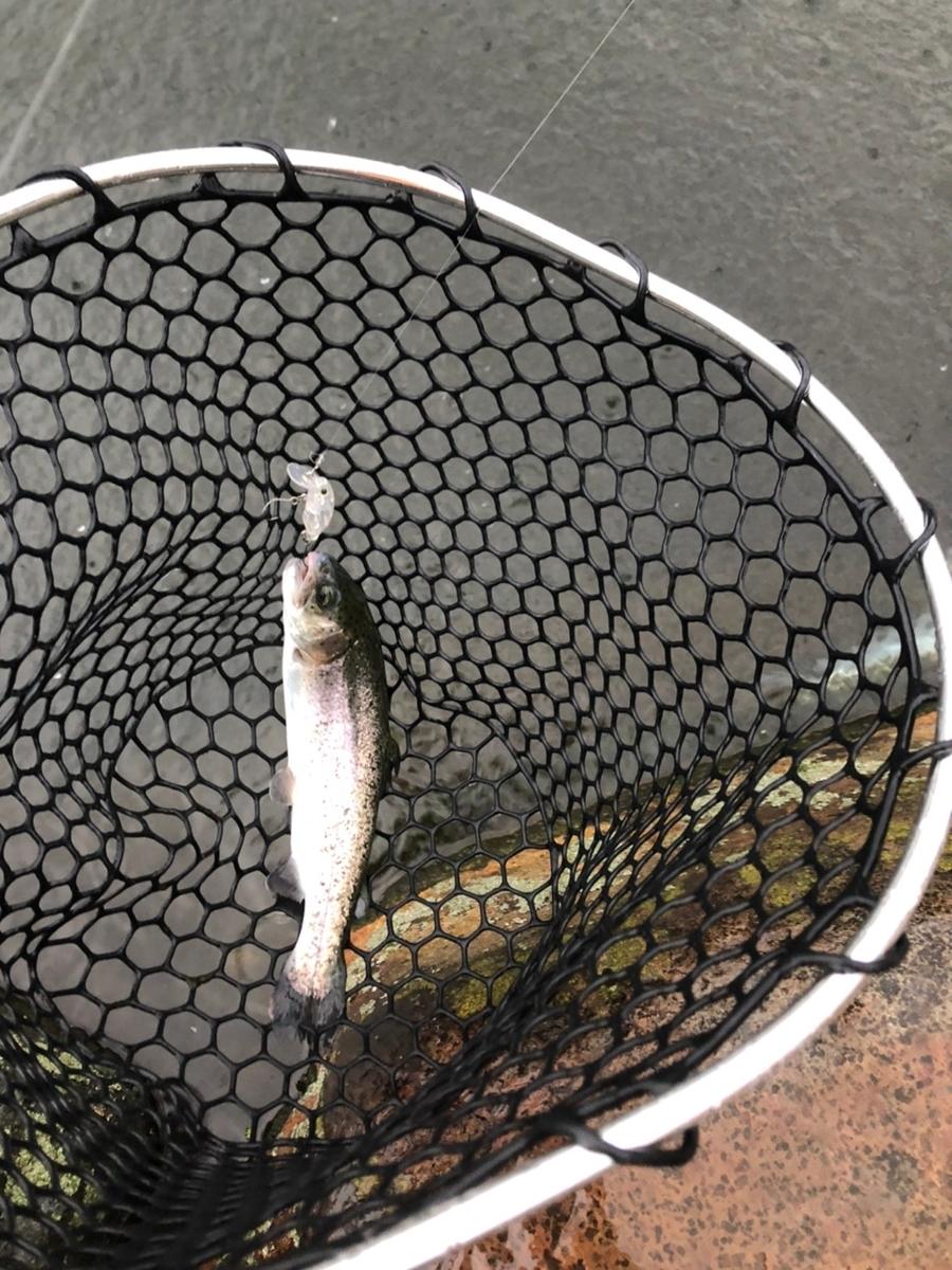 f:id:fishing_tanuki:20210314205330j:plain