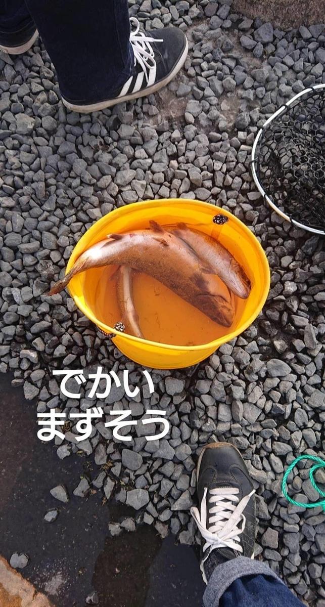 f:id:fishing_tanuki:20210317220224j:plain