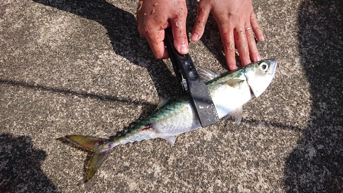 f:id:fishing_tanuki:20210506210648j:plain
