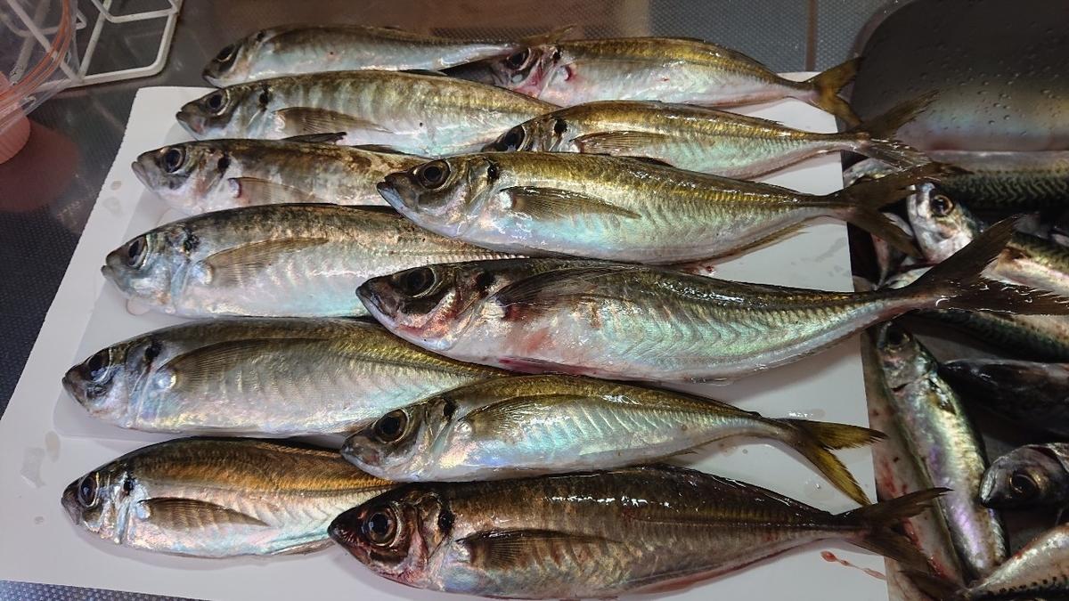 f:id:fishing_tanuki:20210506212613j:plain