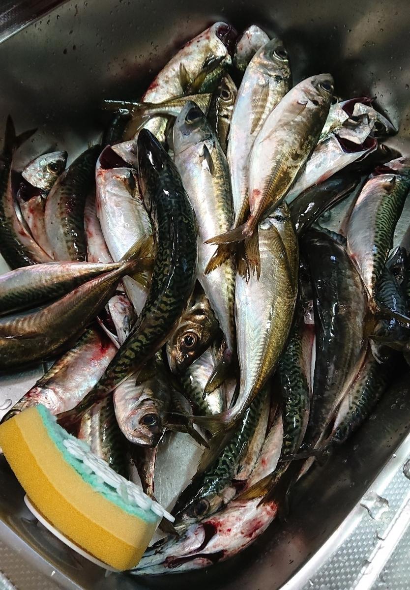 f:id:fishing_tanuki:20210506212807j:plain