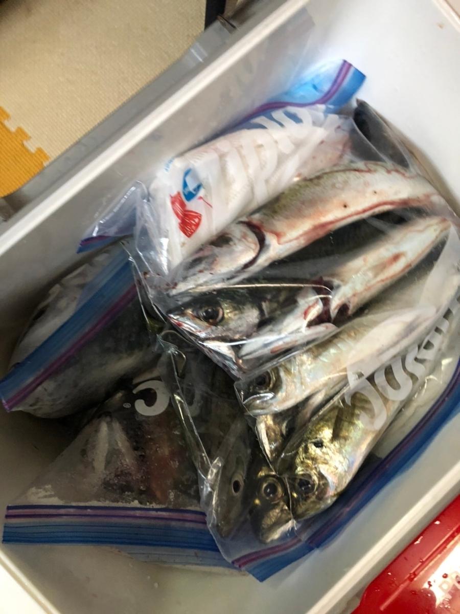 f:id:fishing_tanuki:20210506214941j:plain