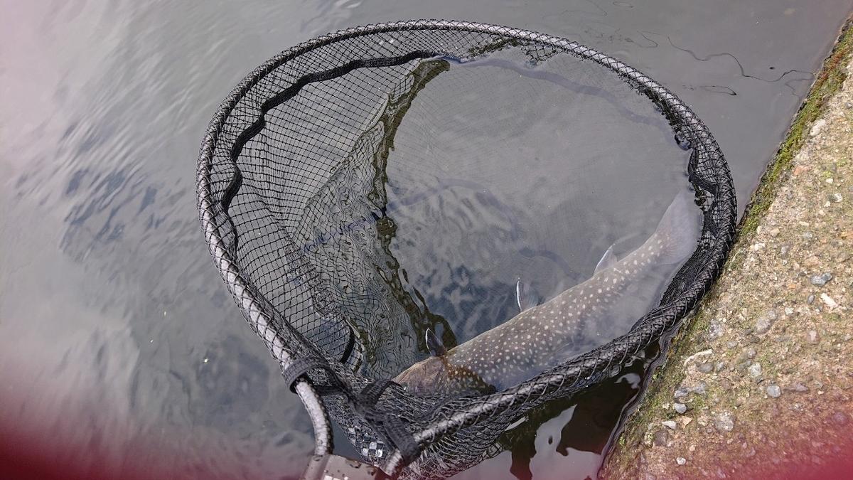 f:id:fishing_tanuki:20210526192404j:plain