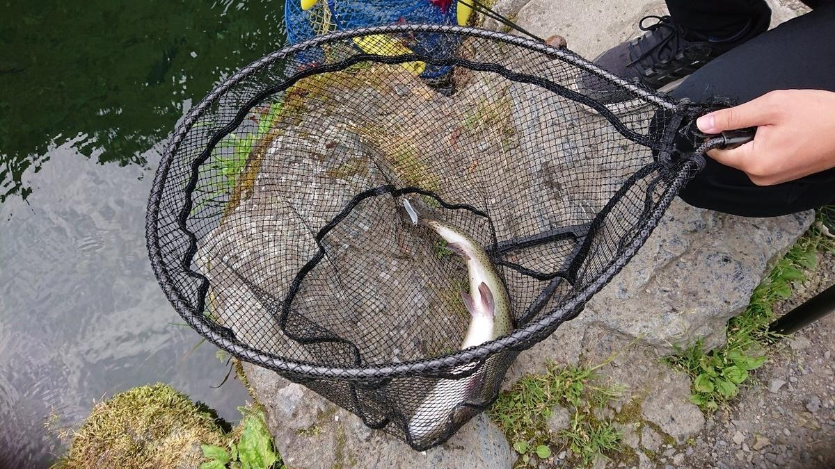 f:id:fishing_tanuki:20210615202407j:plain
