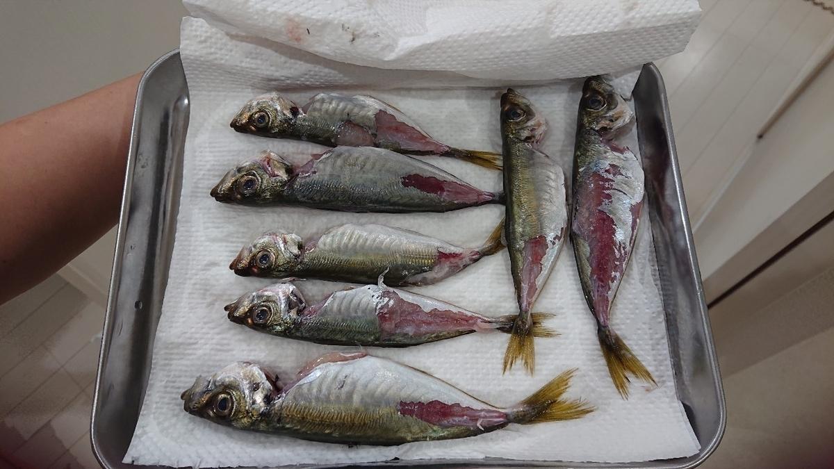 f:id:fishing_tanuki:20210706204124j:plain