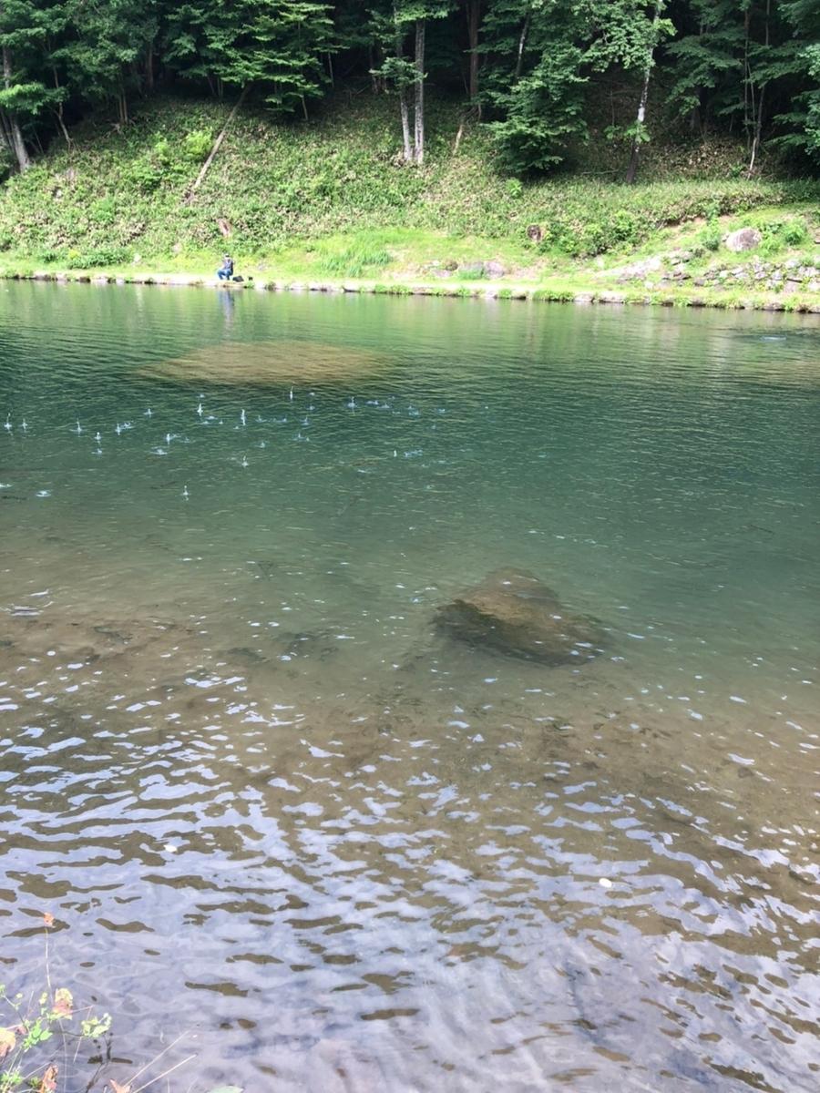 f:id:fishing_tanuki:20210730200336j:plain