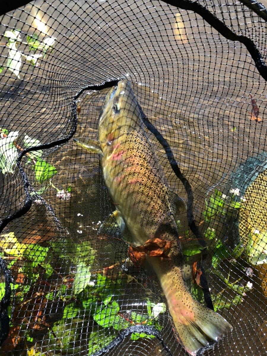 f:id:fishing_tanuki:20211005204650j:plain