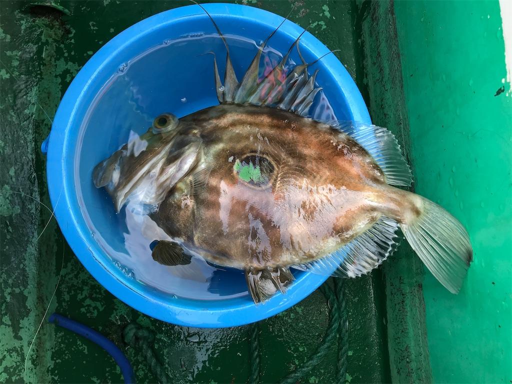f:id:fishingandwine:20200115221430j:image