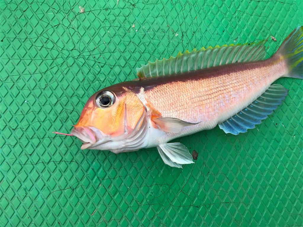 f:id:fishingandwine:20200115221437j:image