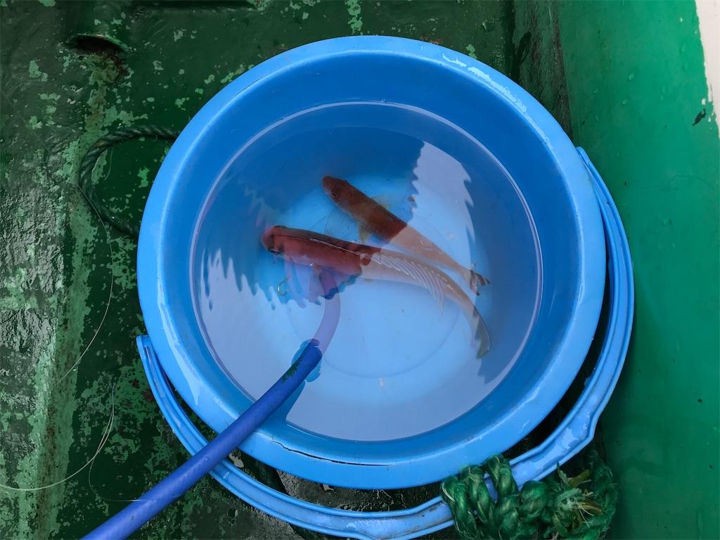 f:id:fishingandwine:20200115221452j:image