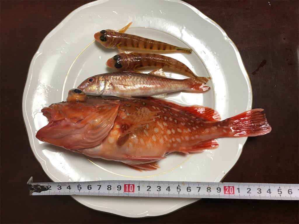 f:id:fishingandwine:20200115221528j:image