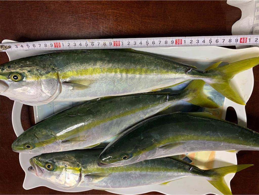 f:id:fishingandwine:20201025121410j:image