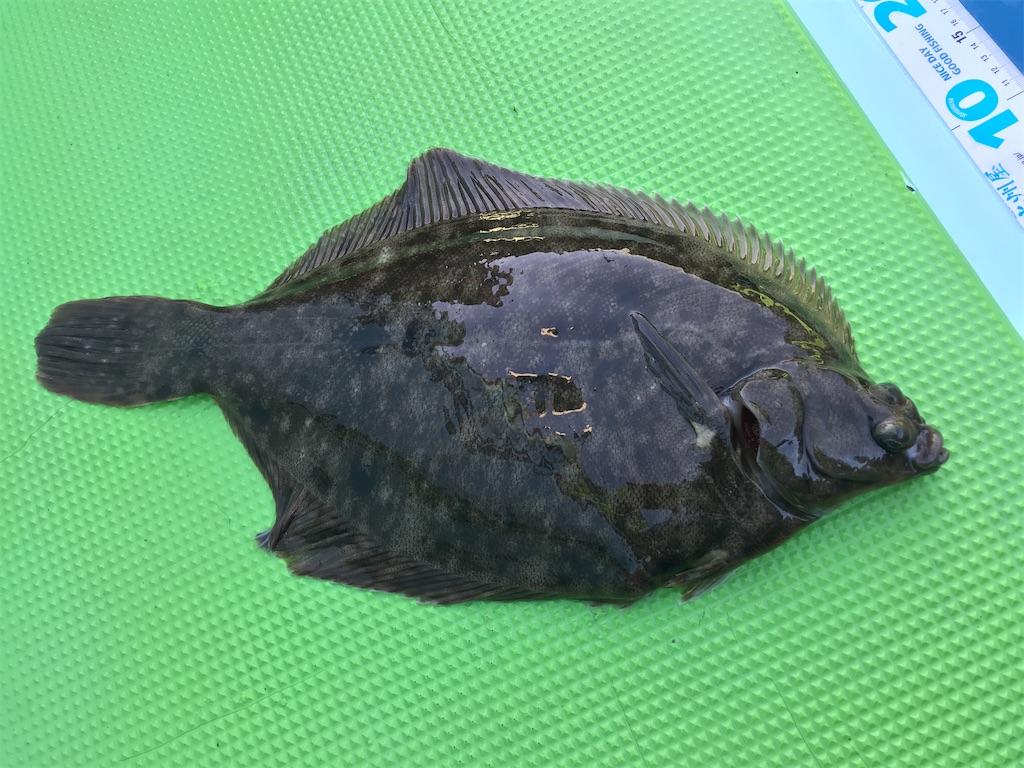 f:id:fishingandwine:20201121194334j:image